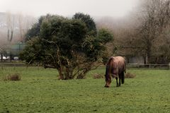 Horse on the field in a foggy morning / Foggy autumn morning a horse and a tree stock photo