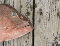 I have something to say. A Fish with big lips laying on wood Stock Photo