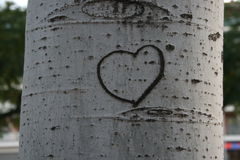 I heart you. The shape of a heart on a white tree from a spanish garden Royalty Free Stock Photo