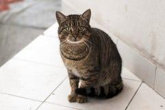 I huvudrollen katt Arkivbild