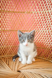 I am a kitten Royalty Free Stock Image