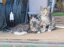 I ladugården övergav sjuka kattungar Royaltyfri Foto