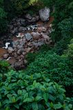 I lager modeller i natur Foto från Idukki royaltyfria bilder