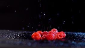 I lamponi con le gocce dell'acqua si muovono contro un fondo nero video d archivio