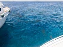 I lati d'avvicinamento di due navi bianche, delle barche individuate vicino e di una vista dell'acqua, un mare blu del sale su un Fotografia Stock Libera da Diritti