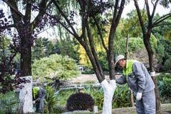 I lavoratori d'abbellimento hanno protezione dell'albero dell'inverno fotografia stock libera da diritti