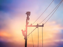 I lavoratori elettrotecnici della siluetta stanno installando il sistema ad alta tensione Immagine Stock