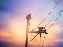 I lavoratori elettrotecnici della siluetta stanno installando il sistema ad alta tensione Fotografia Stock Libera da Diritti