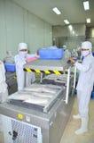 I lavoratori sono l'imballaggio sotto vuoto del pesce gatto di pangasius in una fabbrica dei frutti di mare nel delta del Mekong  Immagine Stock