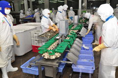 I lavoratori stanno lavorando con una macchina dell'incollatura del gamberetto in un impianto di lavorazione in Hau Giang, una pr Fotografia Stock Libera da Diritti