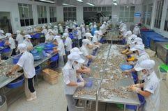 I lavoratori stanno lavorando con una macchina dell'incollatura del gamberetto in un impianto di lavorazione in Hau Giang, una pr Immagine Stock