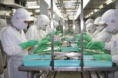 I lavoratori stanno lavorando duro in una fabbrica dei frutti di mare nella città di Ho Chi Minh, Vietnam Fotografia Stock
