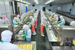 I lavoratori stanno lavorando la persona dura una linea di produzione in una fabbrica dei frutti di mare nella città di Ho Chi Mi Fotografia Stock Libera da Diritti