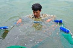 I lavoratori stanno prendendo gli animali da riproduzione del pesce di Koi dagli stagni ai carri armati Fotografia Stock