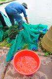 I lavoratori stanno prendendo gli animali da riproduzione del pesce di Koi dagli stagni ai carri armati Fotografie Stock