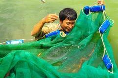 I lavoratori stanno prendendo gli animali da riproduzione del pesce di Koi dagli stagni ai carri armati Immagini Stock