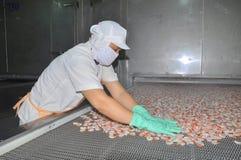 I lavoratori stanno sistemando i gamberetti in una linea alla macchina di congelamento in una fabbrica dei frutti di mare nel Vie Fotografia Stock Libera da Diritti