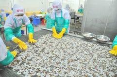 I lavoratori stanno sistemando i gamberetti in una linea alla macchina di congelamento in una fabbrica dei frutti di mare nel Vie Immagini Stock