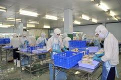 I lavoratori stanno tagliando i materiali freschi crudi in una fabbrica dei frutti di mare nella città di Ho Chi Minh, Vietnam Fotografia Stock Libera da Diritti