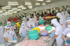 I lavoratori stanno verificando il colore del pesce di pangasius in un impianto di lavorazione in Tien Giang, una provincia dei f Immagine Stock Libera da Diritti