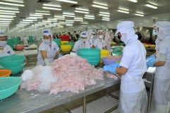 I lavoratori stanno verificando il colore del pesce di pangasius in un impianto di lavorazione in Tien Giang, una provincia dei f Fotografie Stock Libere da Diritti