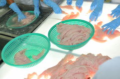 I lavoratori stanno verificando il colore del pesce di pangasius in un impianto di lavorazione in Tien Giang, una provincia dei f Fotografia Stock Libera da Diritti