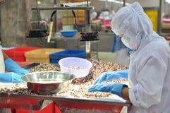 I lavoratori stanno verificando la qualità del polipo ad esportazione in una fabbrica di elaborazione dei frutti di mare Fotografie Stock