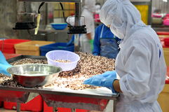 I lavoratori stanno verificando la qualità del polipo ad esportazione in una fabbrica di elaborazione dei frutti di mare Fotografia Stock