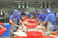 I lavoratori vietnamiti stanno raccordando il pesce di pangasius in un impianto di lavorazione dei frutti di mare nel delta del M Immagini Stock
