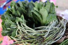 I legumi verdi in verdure contengono la clorofilla, il beta-carotene e la vitamina E, che contengono gli antiossidanti immagini stock libere da diritti