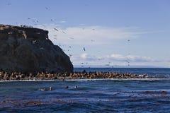 I leoni di mare ed i cormorants si avvicinano all'isola di Magdalena Fotografia Stock Libera da Diritti