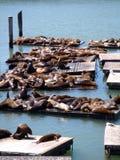 I leoni di mare riposano vicino al pilastro 39 a San Francisco Immagini Stock Libere da Diritti