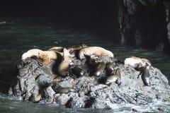 Caverna dei leoni marini della costa dell'Oregon fotografia stock