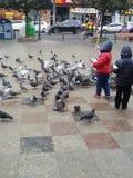 I like birds Royalty Free Stock Photo