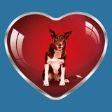 I like dogs, they are in my heart ! vector illustration