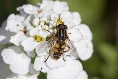 I like nectar Stock Images