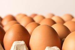 I lotti di grande pollo eggs su un fondo leggero Fine in su prescelto fotografia stock libera da diritti