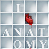 I love anatomy. Bizarre style message (3D concept Royalty Free Stock Photography