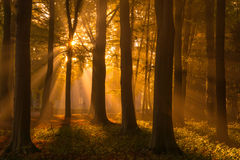 I Love Autumn. Martijn van der Nat Royalty Free Stock Photo