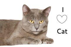 I love cat card Stock Photos