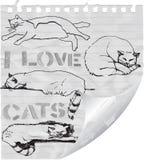 I love cats Royalty Free Stock Photo