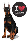 I love doberman Royalty Free Stock Images