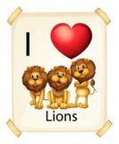 I love lions Stock Photos