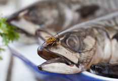 I love Mackerel Fish Stock Photos