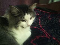 I love my cat Royalty Free Stock Photos