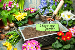 I love my garden Royalty Free Stock Images