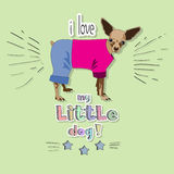 I love my little dog! Royalty Free Stock Photo