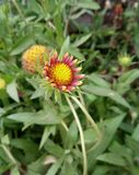 I love natures. Flowers in my garden stock photos