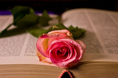 I love read. This beautiful rose shows my love to read Stock Photo