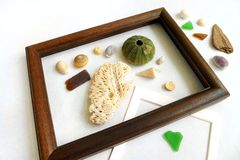 I Love the Sea! collection. A fun concept photograph for someone who loves the sea - a collection of assorted objects picked from the beach or seaside. Corals royalty free stock image